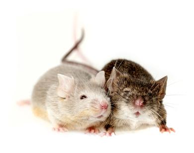 Mäuse für die Tüte