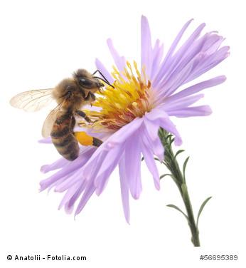 """Aktion """"Rettet die Bienen!"""""""