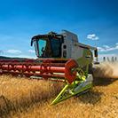 Bauern erwarten geringe Getreideernte
