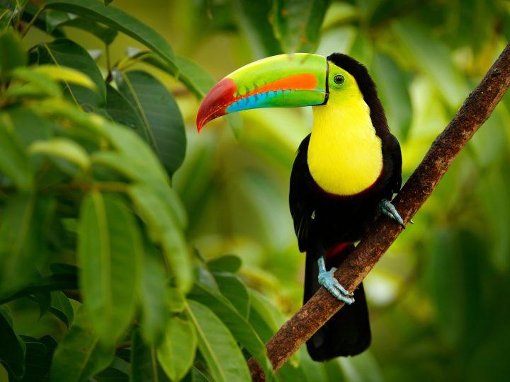 Backen in Costa Rica