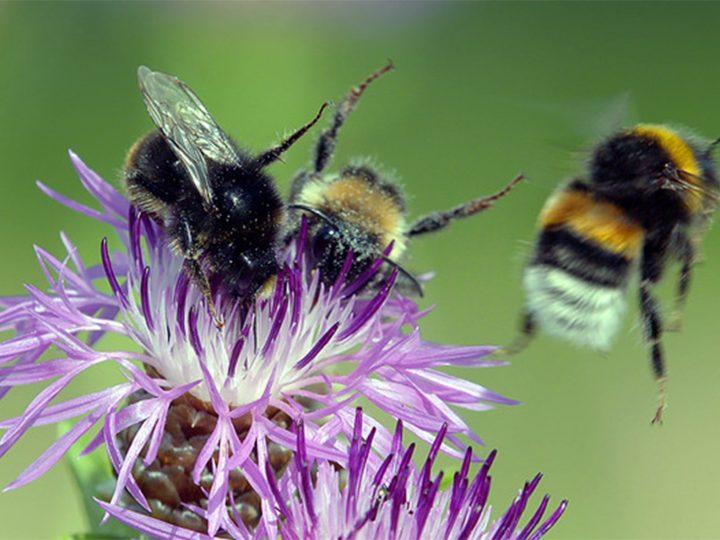 TV: Welt ohne Insekten